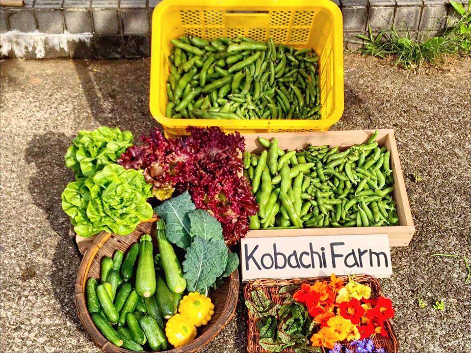 予約販売マルシェ(kobachi farm)